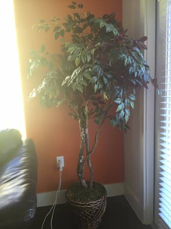 best of craigslist: COME TAKE THESE FAKE TREES BEFORE I HURL ... House Plants For Sale Craigslist on 2000 chevy crew cab dually for sale, trulia for sale, overstock for sale, auctions for sale, olx for sale, magazine for sale, bing for sale, list items for sale, maxim for sale, classifieds for sale, hotpads for sale, skype for sale, internet for sale, target for sale, angie's list for sale, instagram for sale, ford f650 tow truck for sale, weather for sale, 1981 datsun 4x4 for sale, facebook for sale,