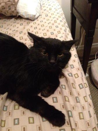 best of craigslist: FOUND: Adorable, stupid cat  Please save him